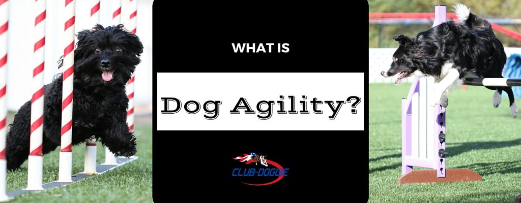 What Is Dog Agility ClubDoggie